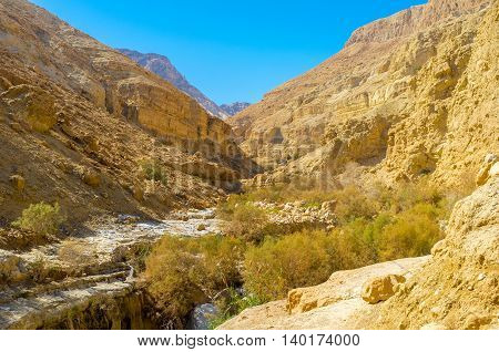 The lush greenery in crevice is the sharp contrast to the surrounding desert Ein Gedi Israel.