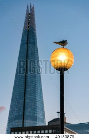 Pigeon sitting on a lamp post facing the Shard of London.