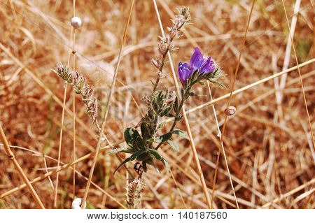 The summer flora and fauna of the Murgia - Basilicata - Italy
