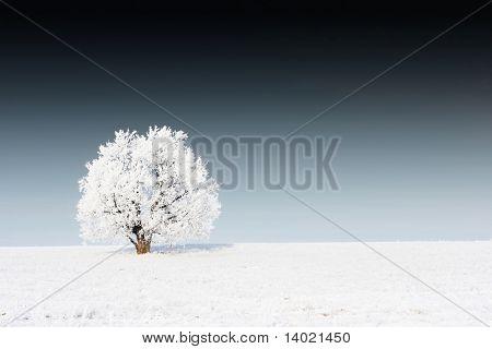 Alone frozen tree on snowy field and dark sky