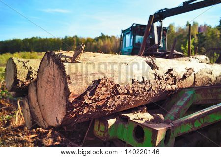 Tractor in an autumn forest. Lumber Industry machine with pile of wood.