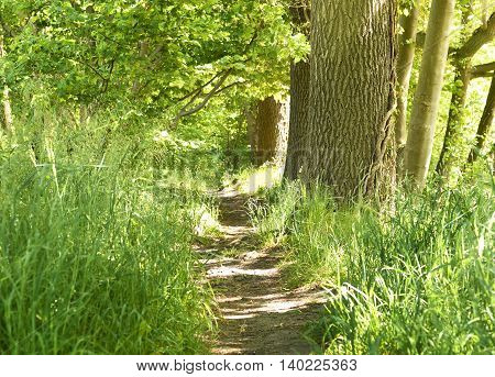 Idyllic forest path with smooth sunlight. Nature background, spring forest. Selective focus of a footpath through a mixed forest.
