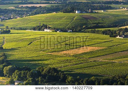 Morning Lights And Colors Over Vineyards Of Beaujolais, France