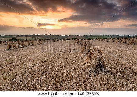 Devon Harvest