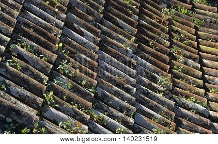 Tiled roof with plants growing in it at Monte near Funchal in Madeira Portugal