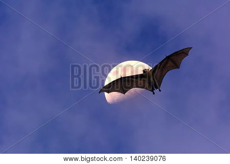 Halloween night with bat flying over moon