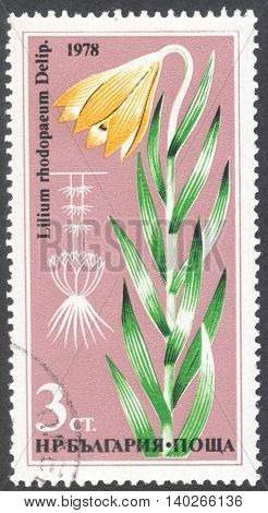 MOSCOW RUSSIA - CIRCA JANUARY 2016: a post stamp printed in BULGARIA shows a flower Lilium rhodopaeum the series