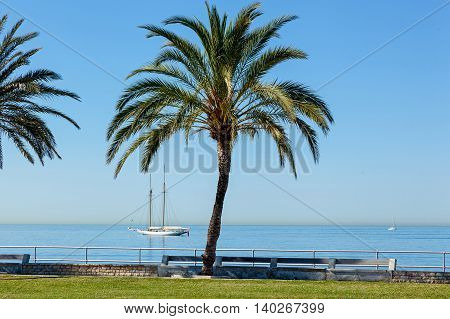Palm on seafront in a sunny day. In the Background is sailer in complete calm. Cloudless sky above head.