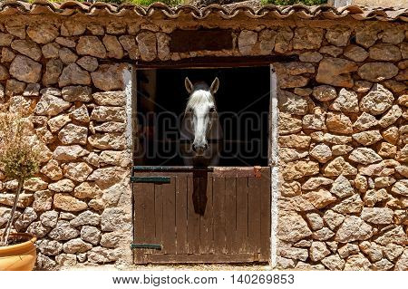 Horse behind a wooden stable doorHorse in stable