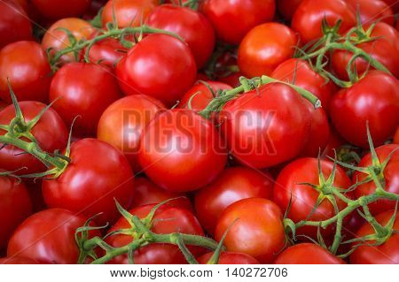 tomato background - pile fresh tomatoes closeup