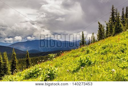 Alpine Meadows Manning Park Canada Scenery In Summer