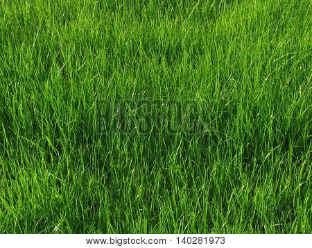 Image of green grass on meadow background