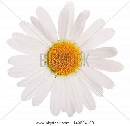 Flower of camomile isolated on white background close-up.