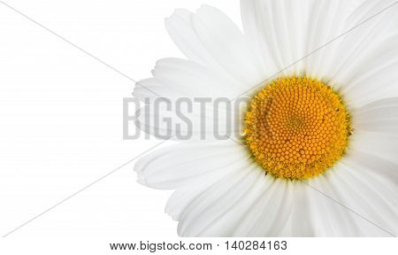 Flower Of Camomile Isolated On White Horizontal Background With Blank Place For Your Text, Close-up.
