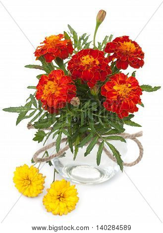 Beautiful Flowers Marigolds In A Glass Jar With Ropes Bowknot And Flowers Of Chrysanthemum Isolated