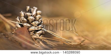 Beautiful Christmas pine cone in the forest - close up