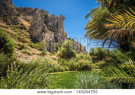 Preveli palm forest in Crete island, Greece. This amazing tropical forest is located in the gorge of Kourtaliotis near the beach of Preveli.