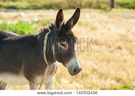 Close Up Of A Donkey On A Grassy Mountain