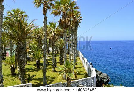 Palm trees on Callao Salvaje coast in Adeje Tenerife
