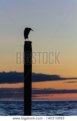 seagull silhouette resting on a post at sunset in Point Roberts Washington state USA - night picture