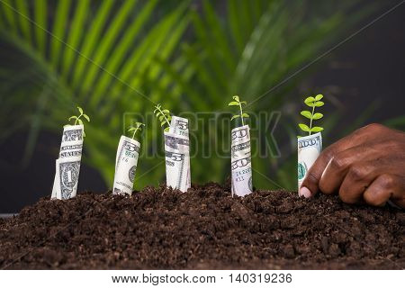 Close-up Of Person's Hand Planting Sapling Rolled With Banknote