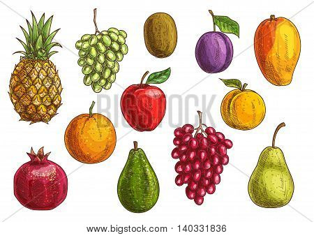 Tropical and exotic fruits set. Isolated vector sketch icons of juicy pineapple, green and red grape, pomegranate, orange, kiwi, apple, pear, guava, plum, apricot mango