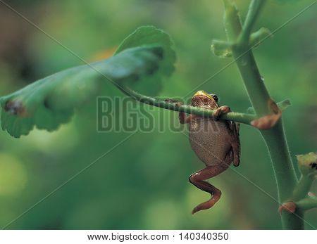 Frog hanging on stem