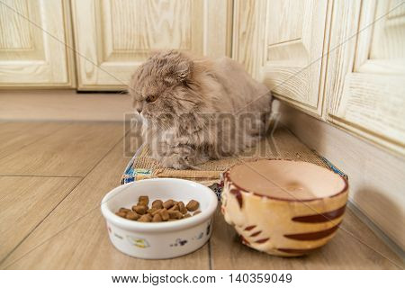 Cat lies on mat near boal with feed and drinking