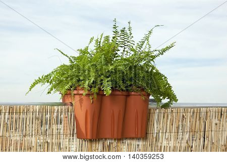 Planter box with fern on the ledge of the balcony