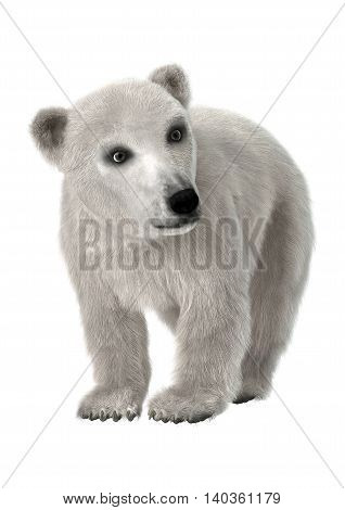 3D Rendering Polar Bear Cub On White