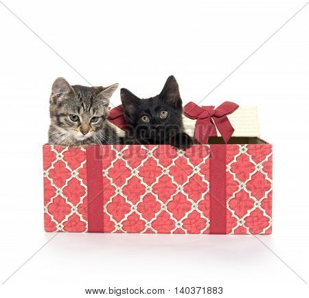 Two Cute Kittens And Gift Box