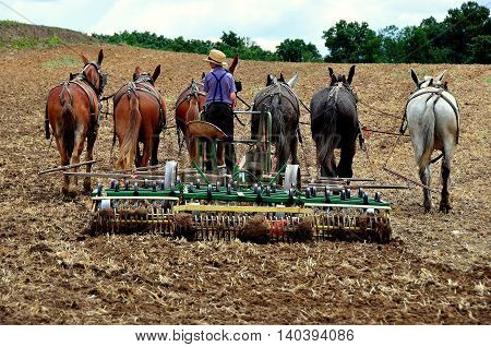 Lancaster County Pennsylvania - June 8 2015: Amish youth using a tiller pulled by a team of six horses plowing a field *