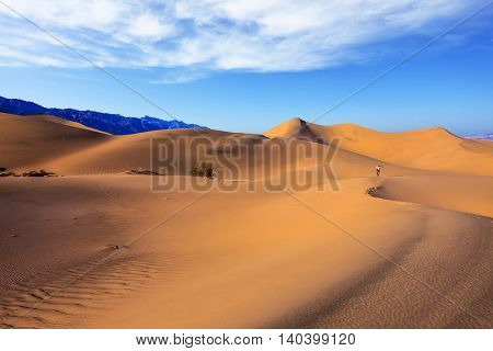 Sunrise in orange sand of the desert Mesquite Flat, USA. The elderly woman - photographer in a striped t-shirt goes among sandy dunes