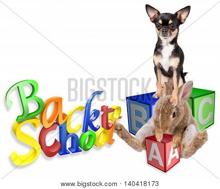 Cute bunny rabbit go back to school with dog