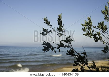 Lake Michigan with Plants and Blue Sky in the Summer.