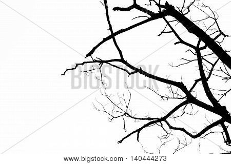silhouette of dried tree texture on isolated white background .