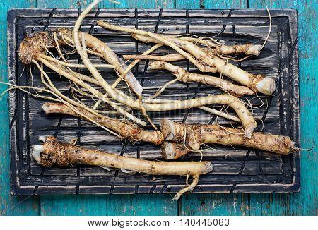Roots Of Plant Horseradish