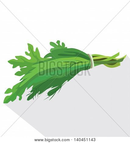 A bunch of fresh herbs: parsley fennel lettuce