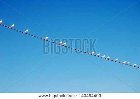 Seagulls waiting perched on high voltage wire