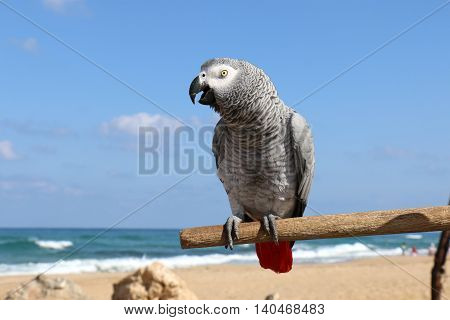 parrot lives on the beach, is able to talk and likes to be photographed