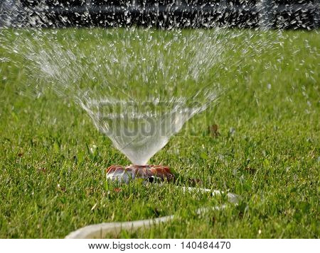 Water sprays from watering sprinkler on the lawn stock image