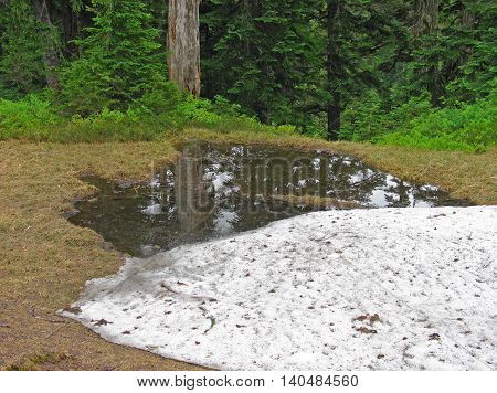 Summer meets traces of winter in the high country of Mt. Baker-Snoqualmie National Forest in Washington State USA.