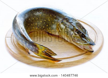 Whole pike fish on a wooden board isolated on white background
