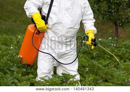Farmer spraying toxic pesticides in the vegetable garden. Non-organic food.