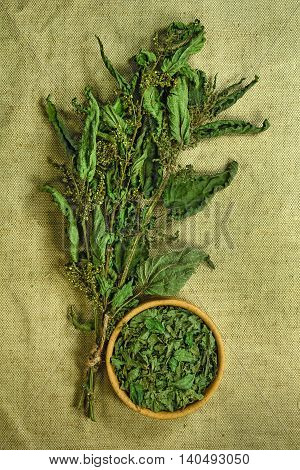 Nettle. Dried herbs for use in alternative medicine.Herbal medicine phytotherapy medicinal herbs.For preparation of infusions decoctions tinctures powders ointments tea. Background green cloth