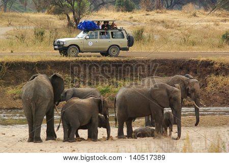 Tarangire National Park, Circa August 2010 - People Photograph A Group Of Elephants During A Safari