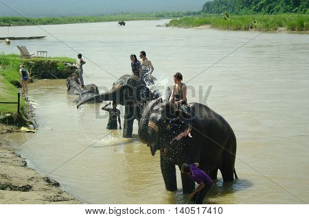 Chitwan,np-circa August 2012 - A Man On Elephant Takes A Bath In The River, Circa August 2012 In Chi