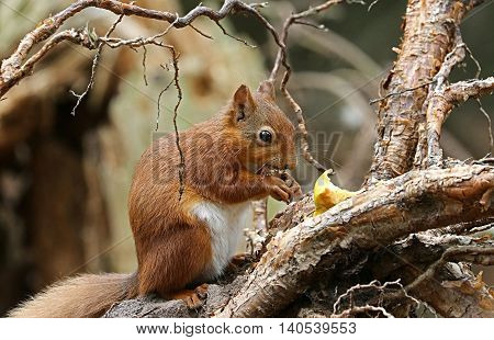A scene of squirrel in the wildlife