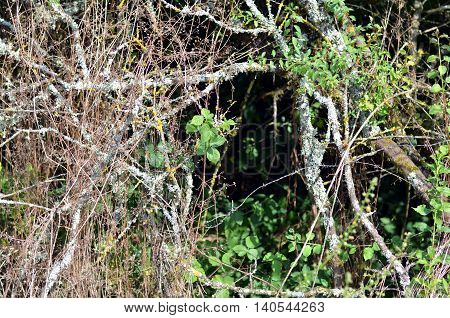 pricky shrub bramble bush in wild landscape during french summer