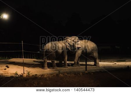 Elephants playing at the zoo night light